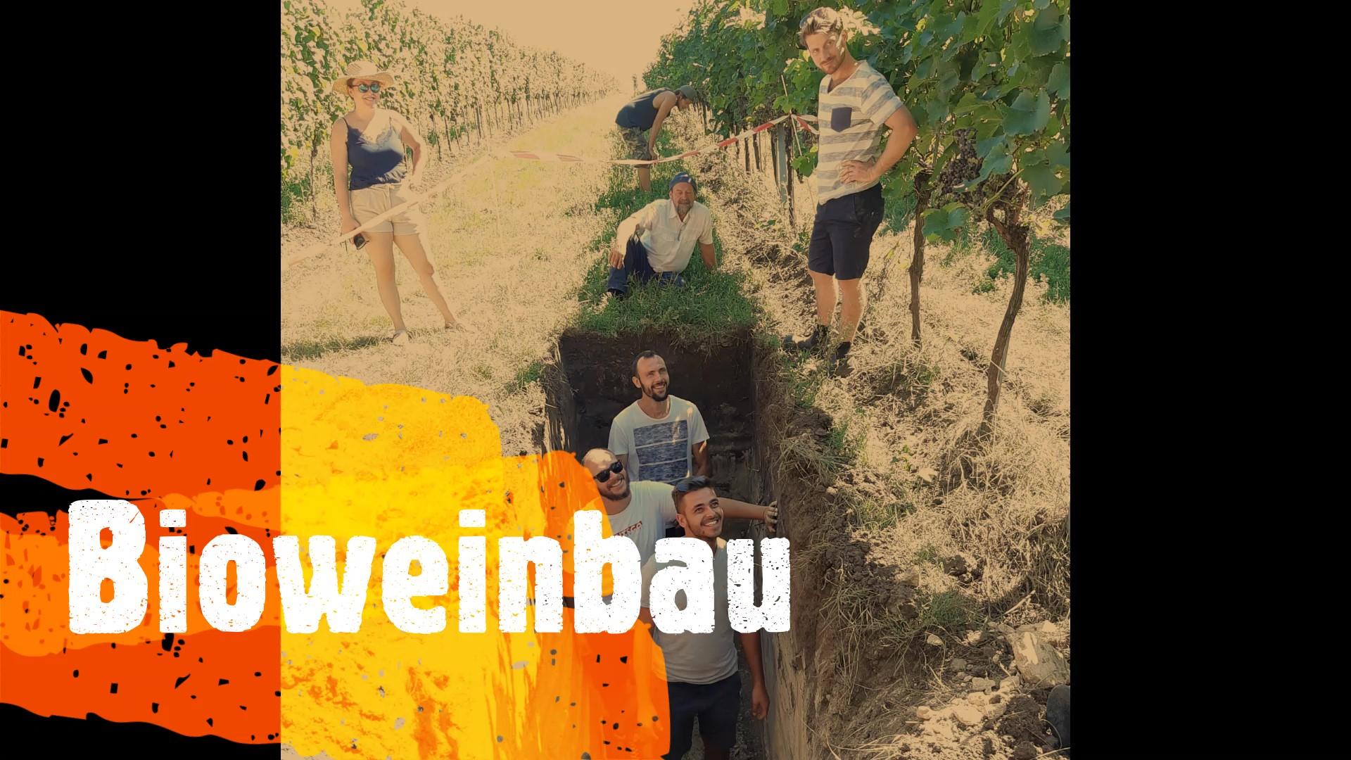 bioweinbau_foto